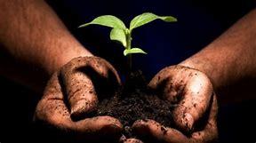mains et plantes